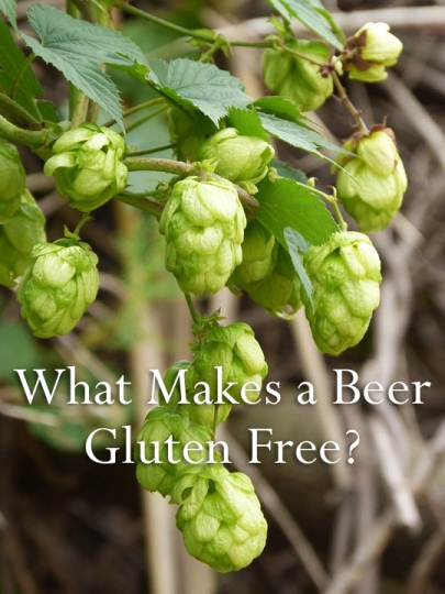 Hops Are Gluten Free