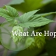Are Hops Gluten Free?